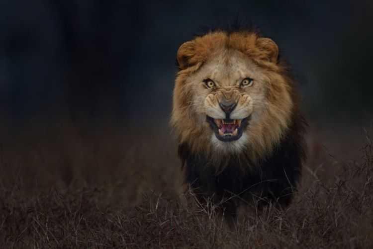4 Leone animali più pericolosi terrificanti del mondo