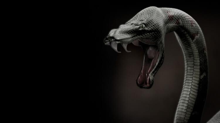 Tra gli animali più pericolosi del mondo c'è il serpente Black Mamba