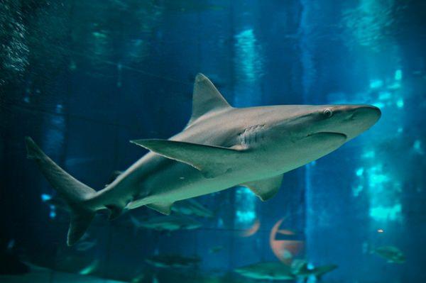 Acquario di genova foto prezzi delfini e lo squalo bianco - Foto di animali dell oceano ...