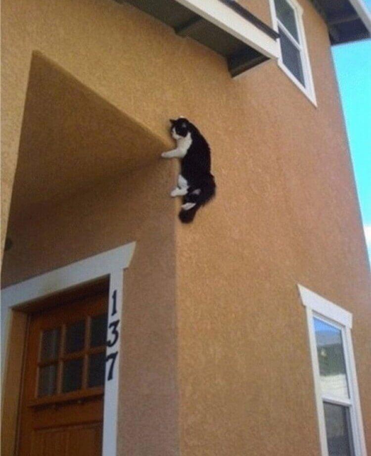 Il fenomenale gatto ragno...