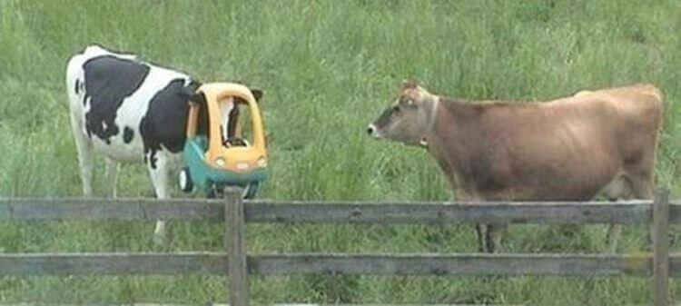 ...e poi dicono che sono una vacca volante...
