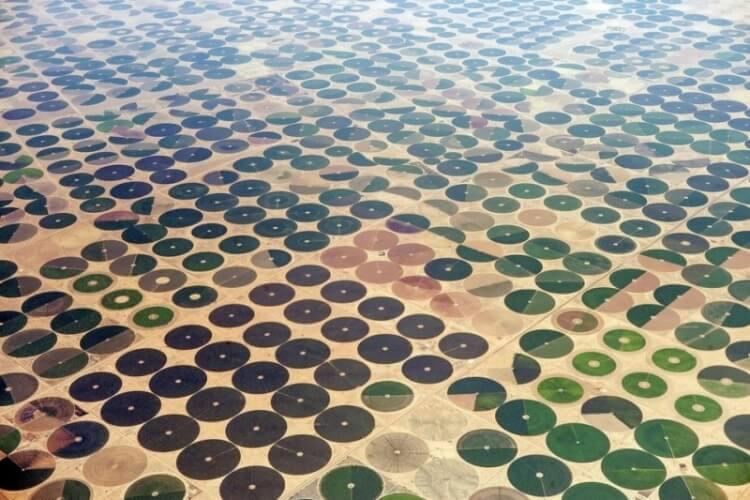 10 Buongiorno psichedelico - Campi agricoli in Arabia Saudita