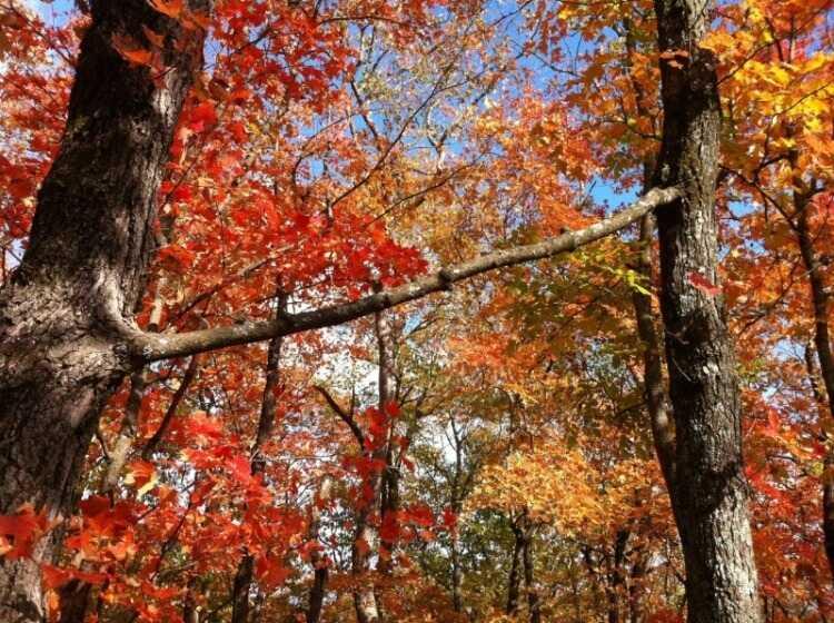 2 Buongiorno d'amore - Due alberi con un ramo in comune