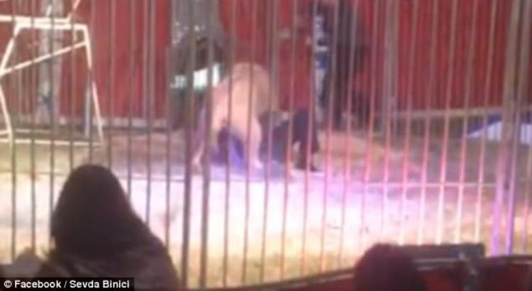 video facebook circo leone tragedia